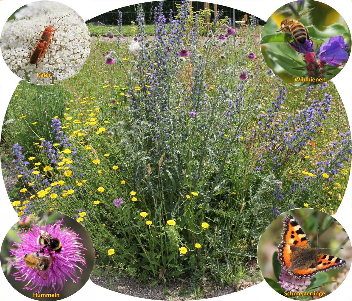 Frontbild Flyer Naturgartengrupe