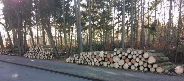 Holzstapel Borkenkäfer